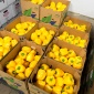 Boxes filled with yellow peppers.